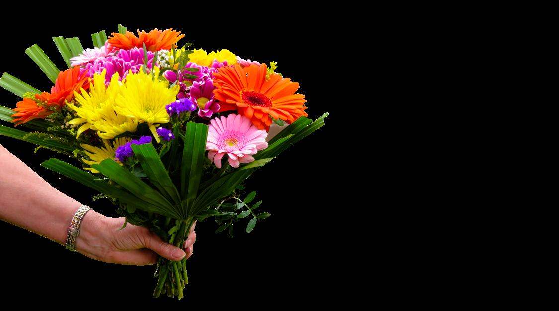 flower-g843b2e892_1920_breit